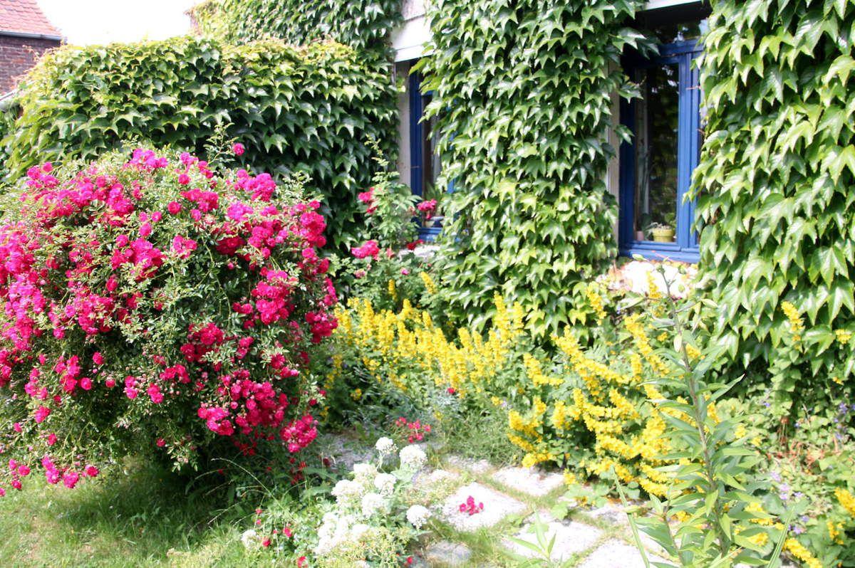 Et pour finir un petit coin de mon jardin pour faire plaisir à Carole une de mes fidèles lectrices