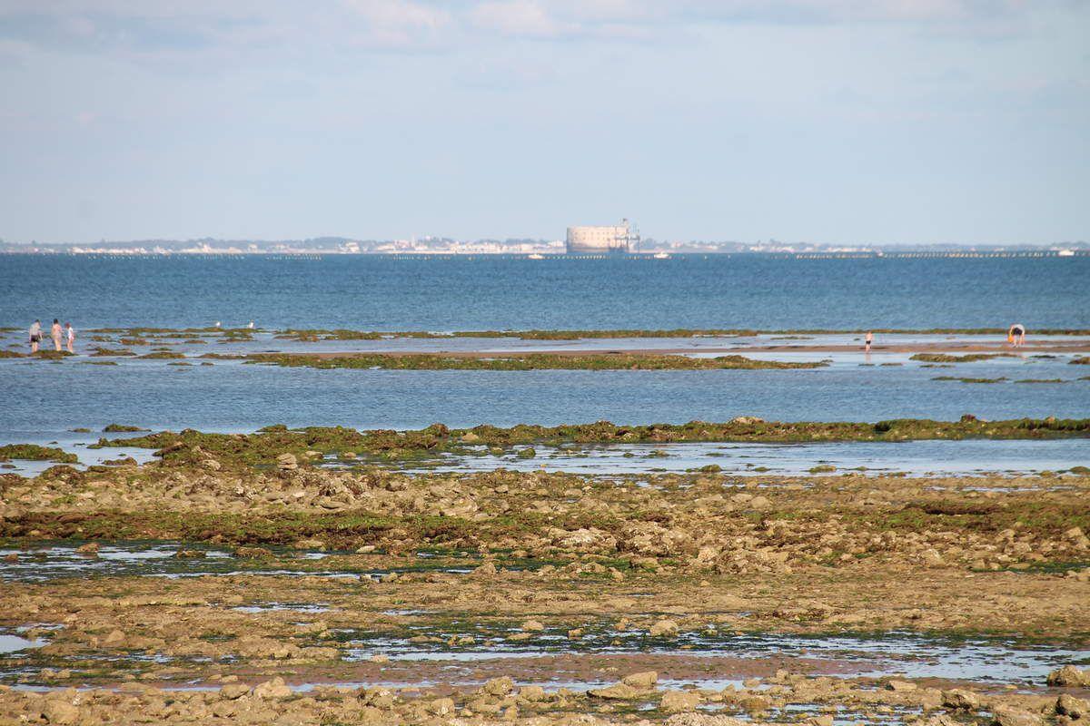 Dos d'églefin en croute de moutarde aux algues et retombée d'épinards - Fort Boyard vu d'Oléron