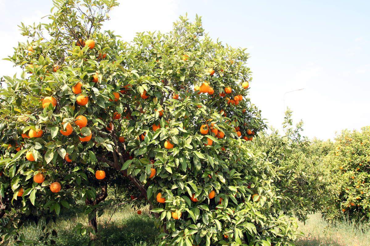 Yaourt grec aux fruits et au miel - Grèce (2) Athènes la relève de la garde