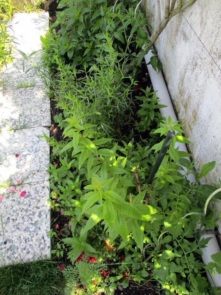 Loup de mer aux légumes rôtis et pesto d'herbes du jardin
