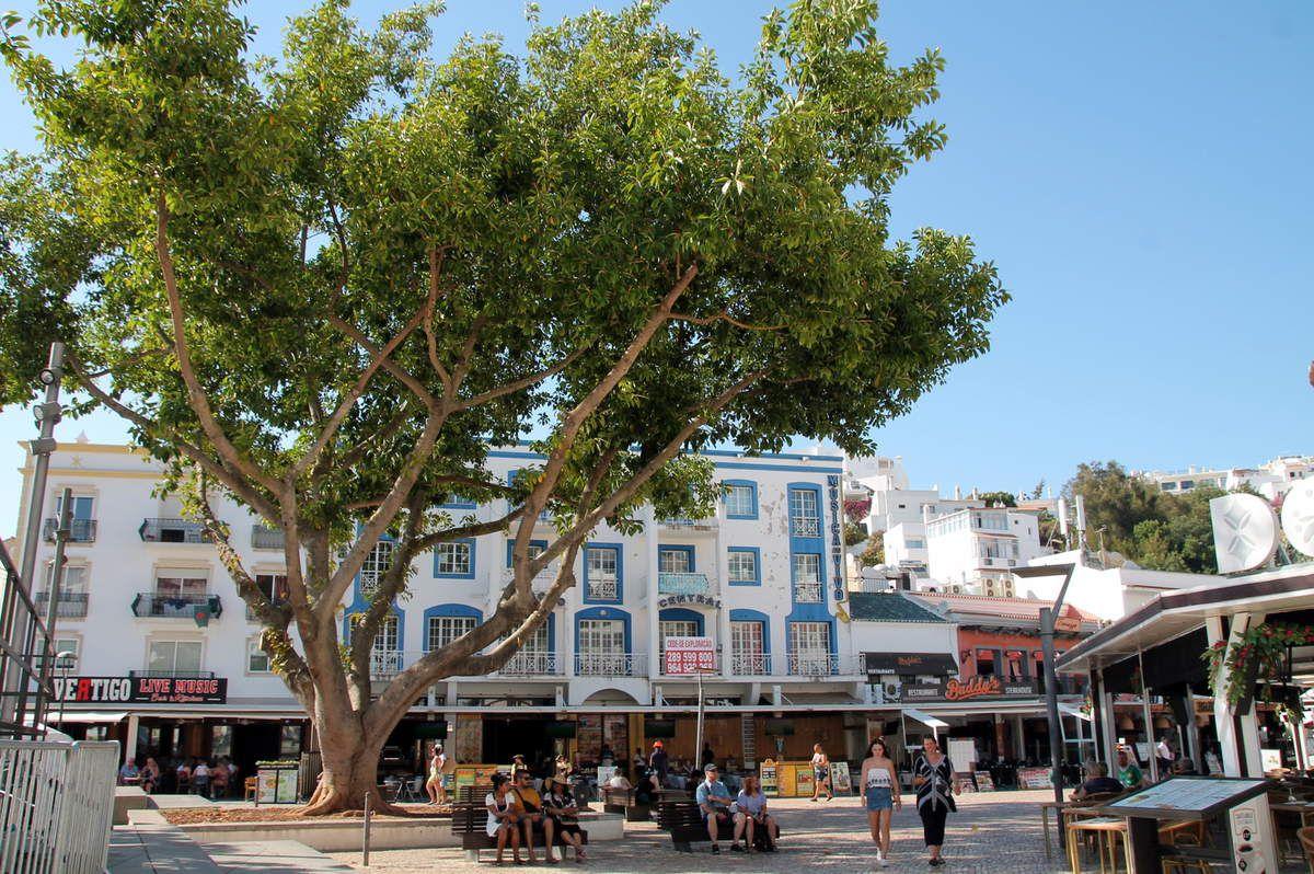 Caldeirada de bacalhau - Balade portugaise en Algarve (4) : Albufeira
