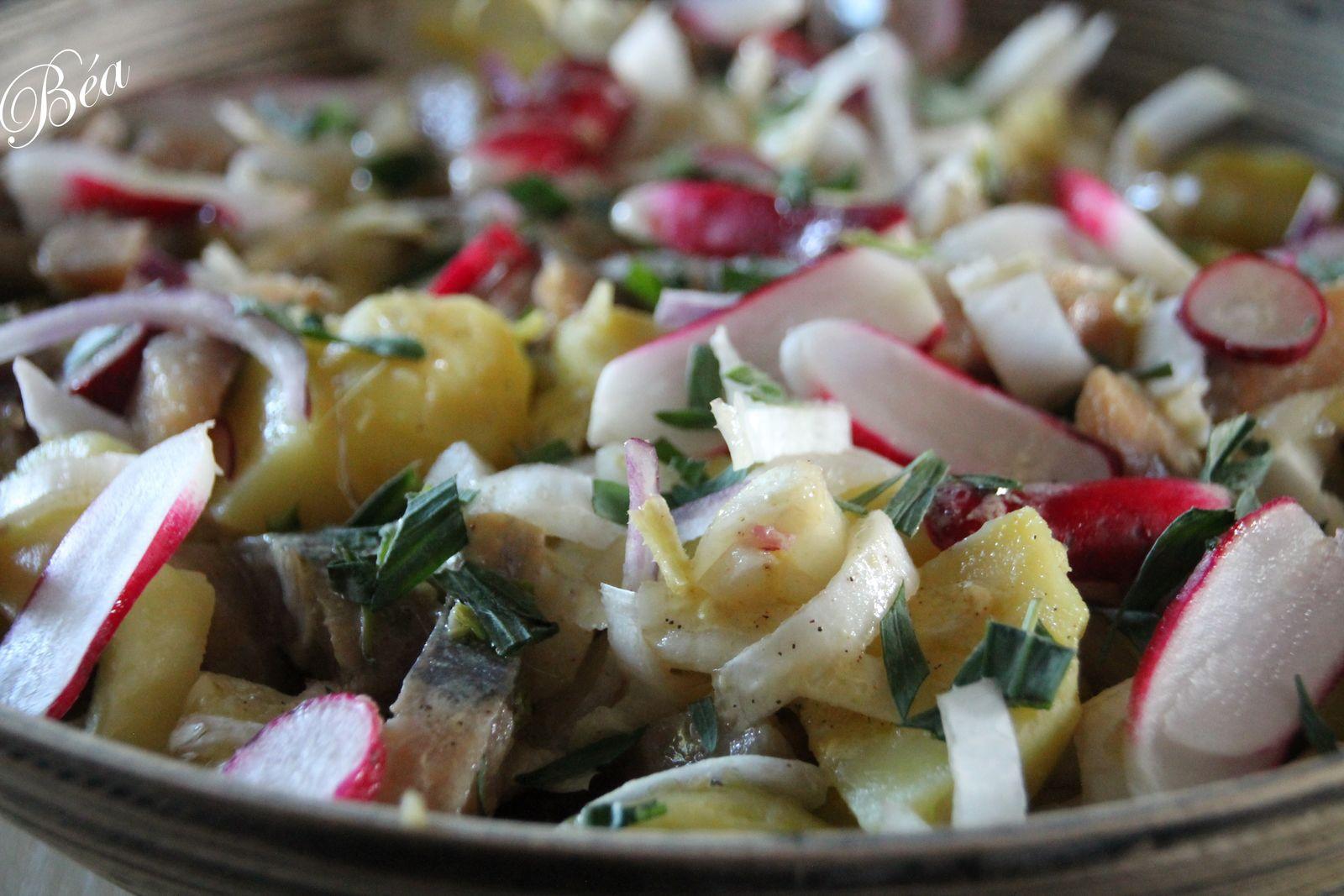 Salade d'endives, pommes de terre et harengs fumés - balade régionale le long de la Côte d'Opale