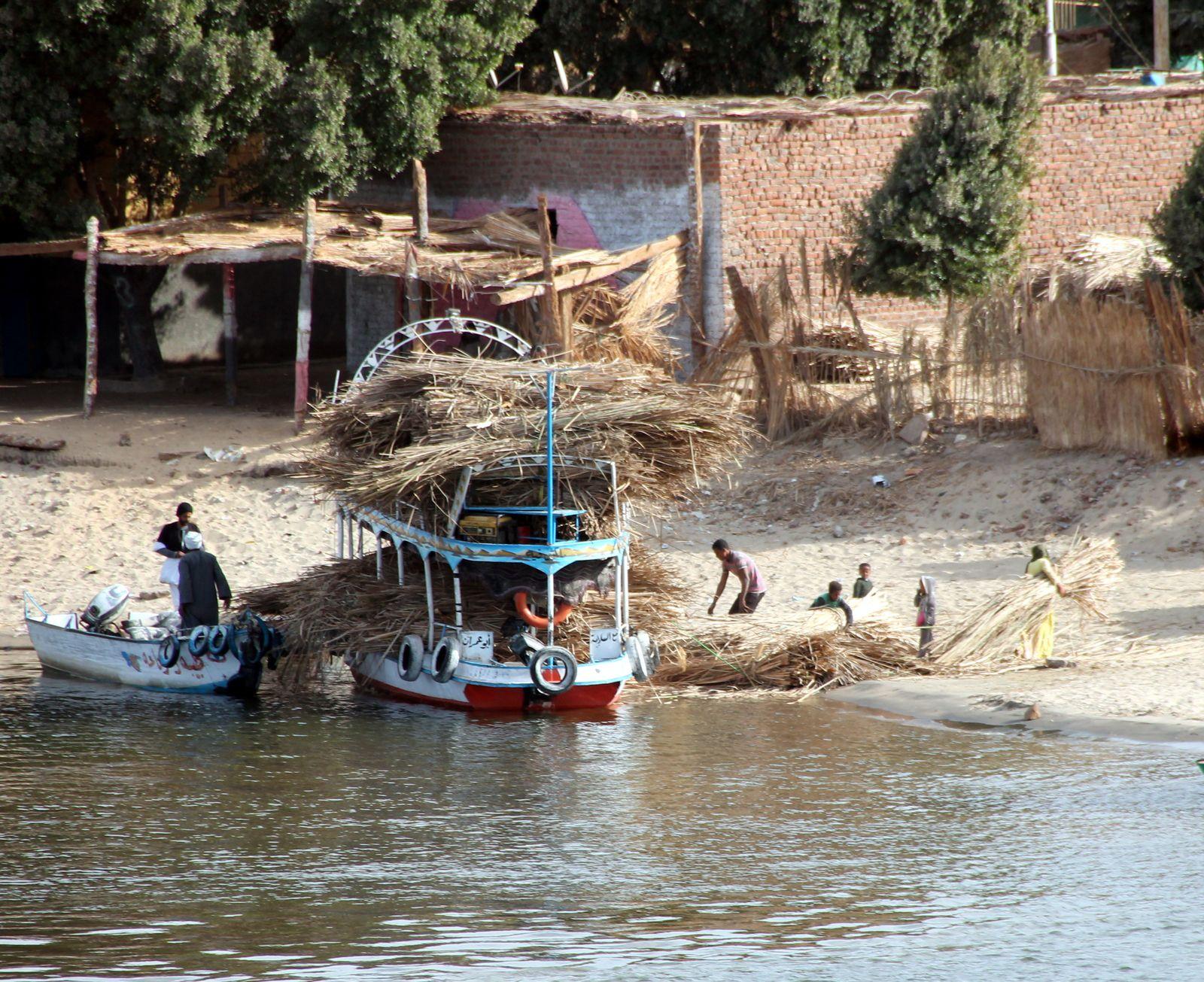 Tarameya, les falafels égyptiens aux fèves - Balade égyptienne : scènes de vie