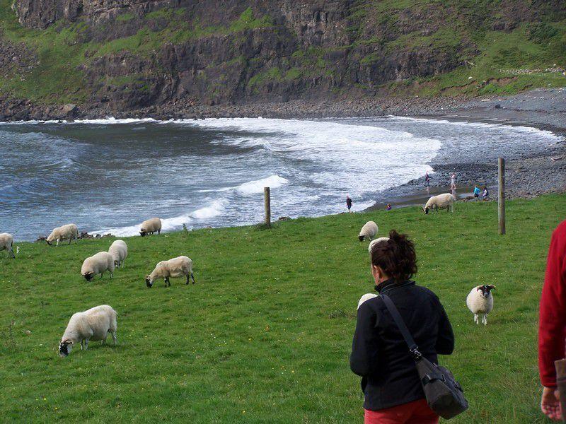 Talisker Bay, ses galets, ses moutons, ses baigneurs...!
