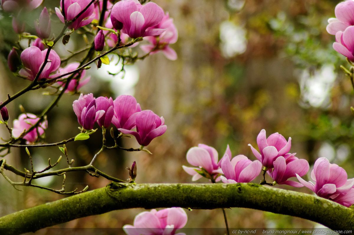 Photos de fleurs du printemps (source: chesscomfiles)