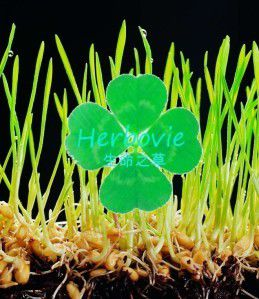 Image du logo herbovie (source: over-blog)