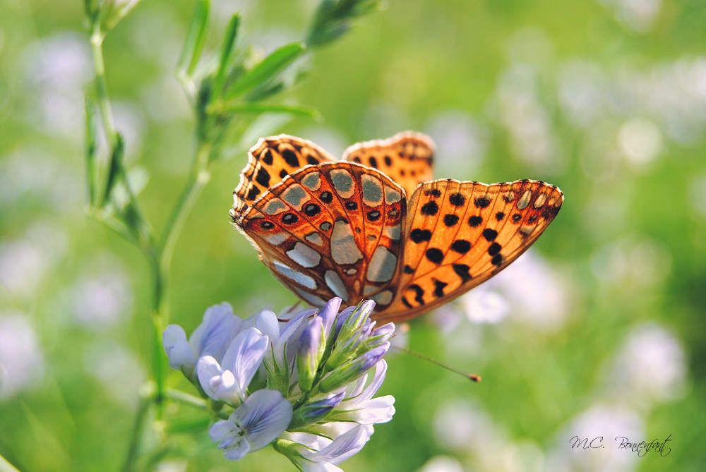 Photo d'un papillon (source: mesinstantsphotos)