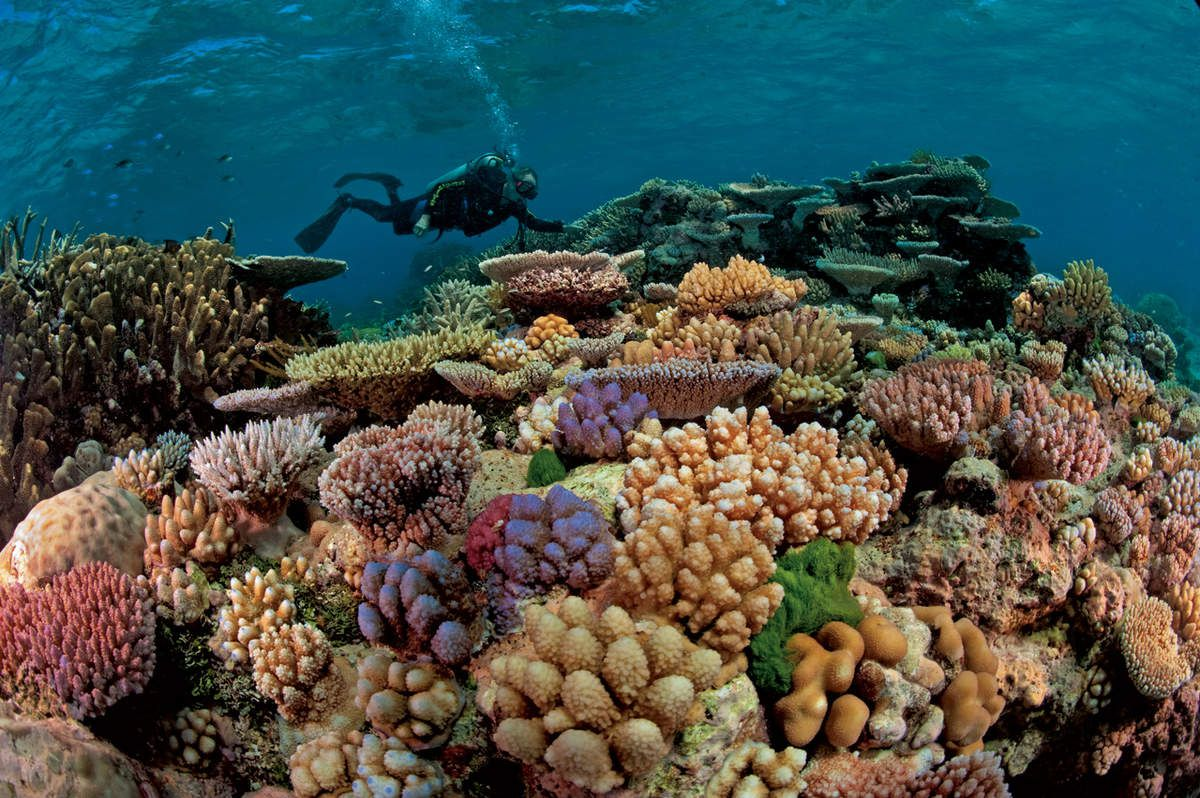 Photo du corail (source: nationalgeographic)