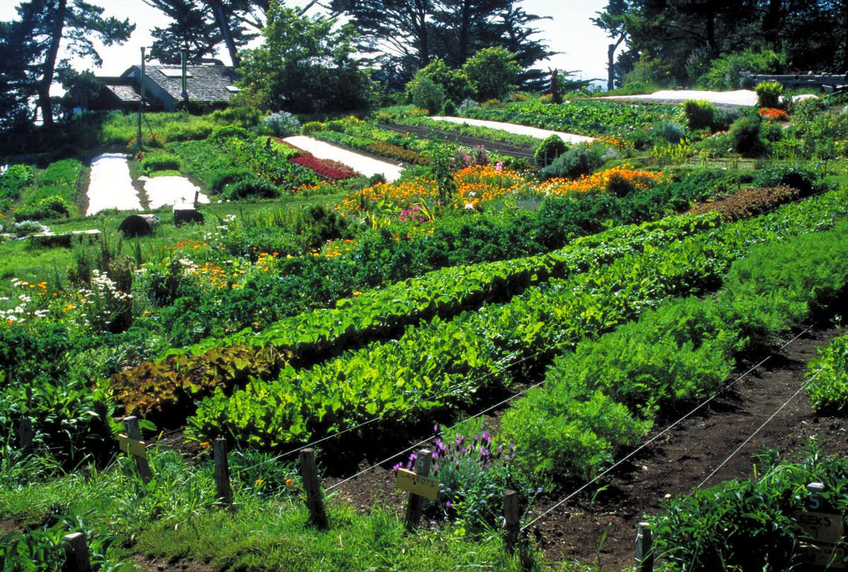 Photo d'un jardin en permaculture (source: http://www.permaculteurs.com/wp-content/uploads/2015/03/beta_2015-03-14_16-29-57.jpg)