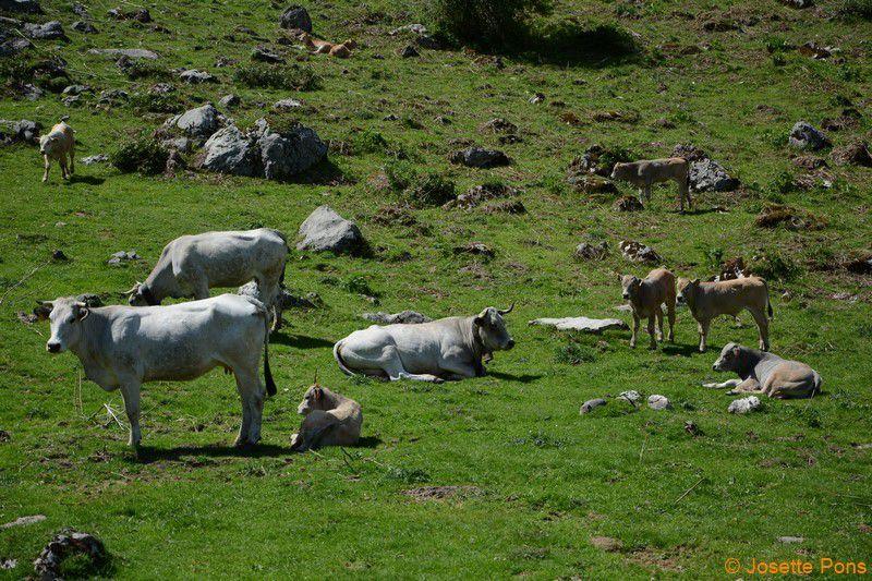 L'étang de Lers et les troupeaux .