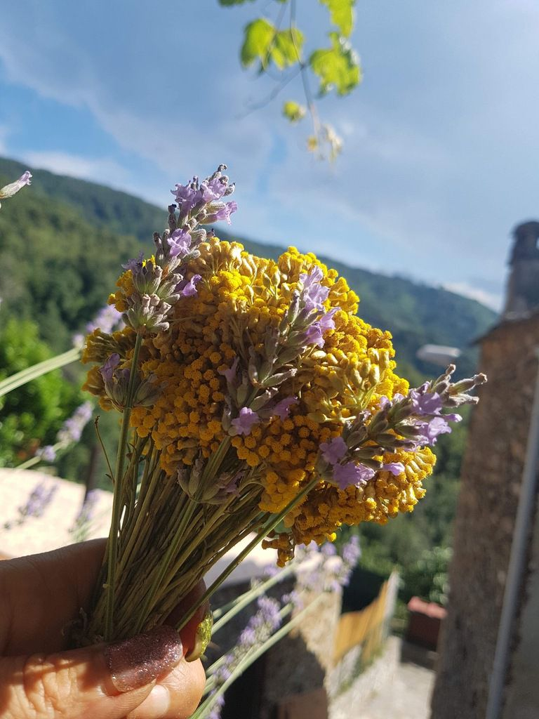 Bouquet d'immortelle de Corse