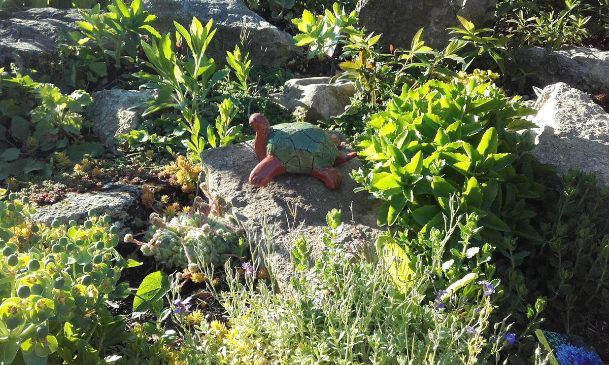 Plantes de rocailles