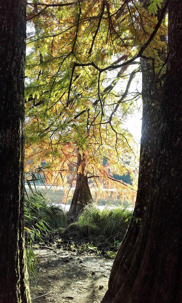 Isère - L'étang de Boulieu en Automne