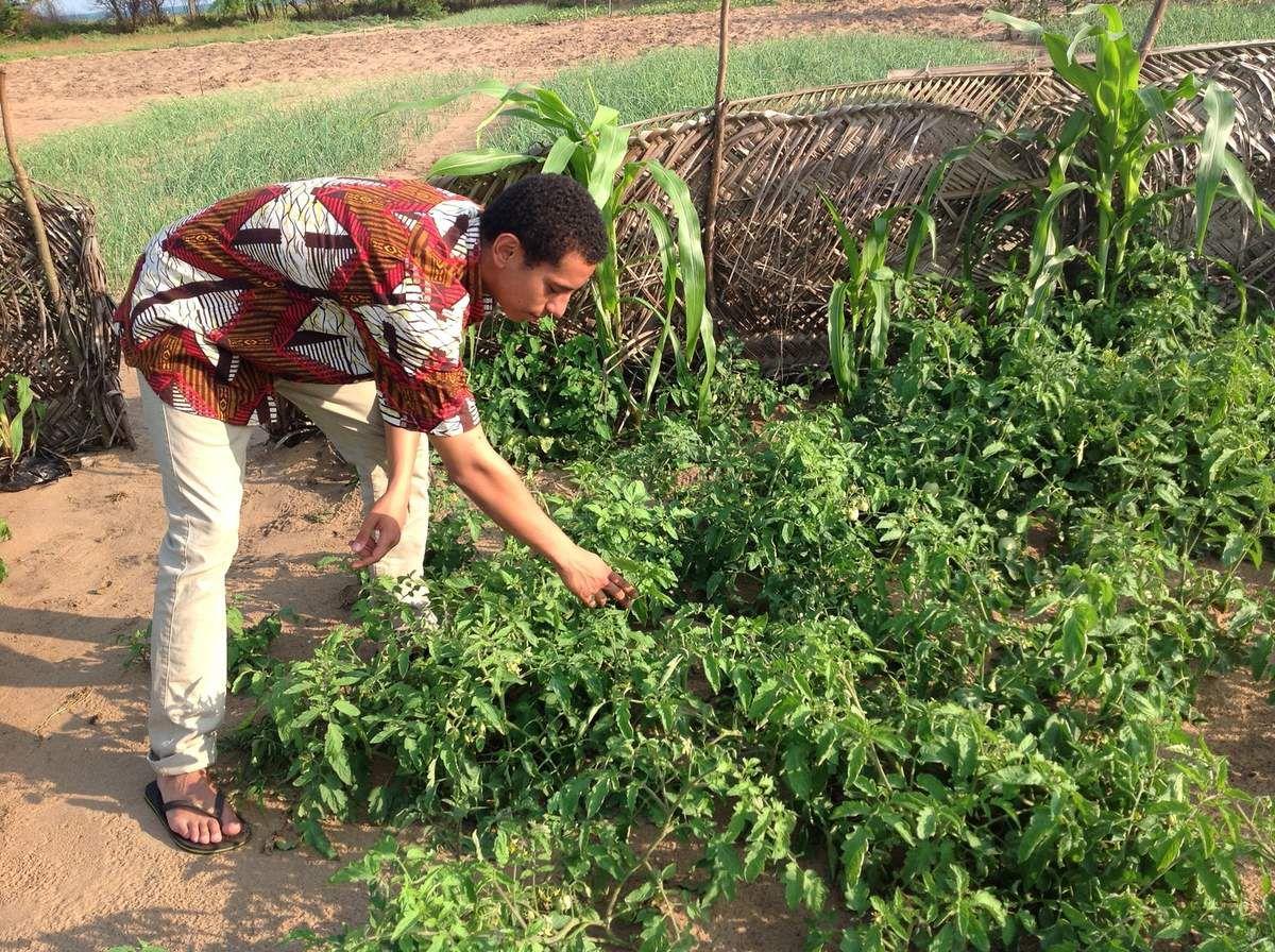 Maraichage biologique à Grand Popo : AGADD installe un nouveau site à Zogbedji