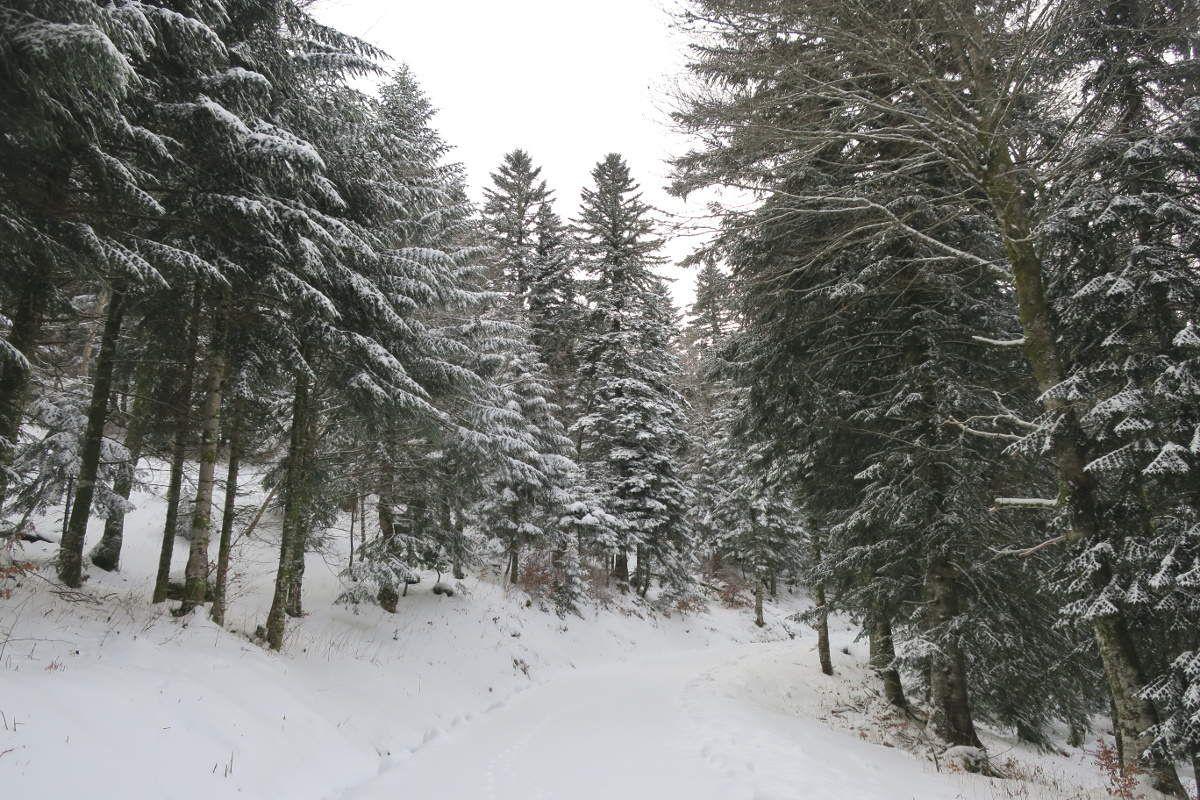 C'est l'hiver qui frappe à notre porte