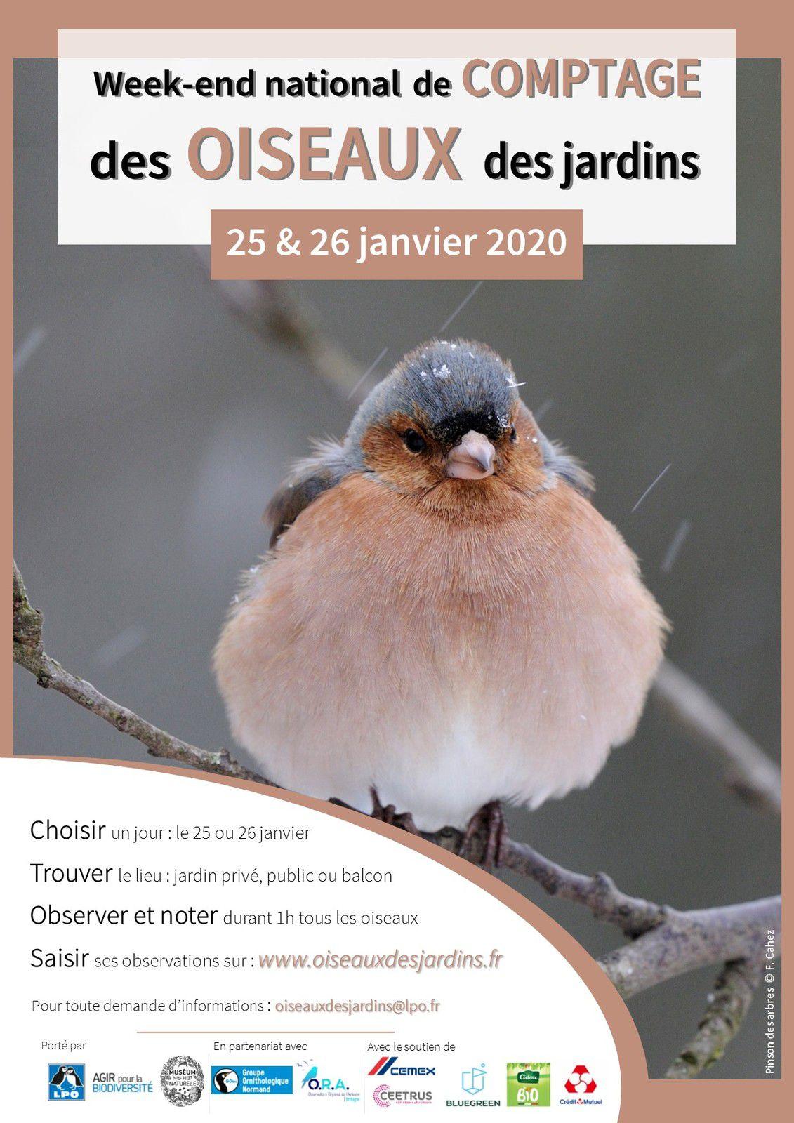 Week-end national de comptage des oiseaux des jardins !