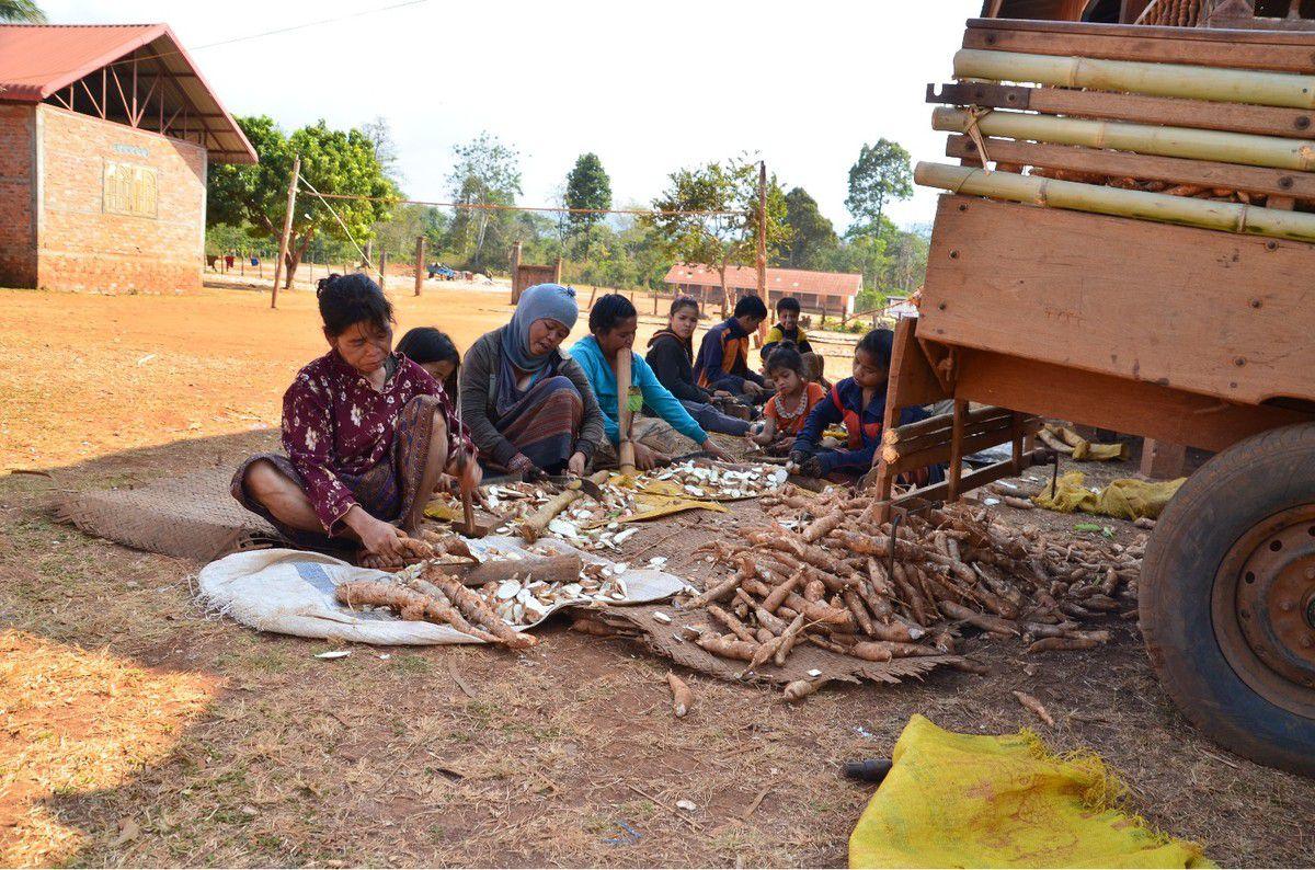 Plateau des Boloven,chez les Katu, on cultive thé, café, manioc,on pratique le tissage...Chutes d'eau Tad Lo et Tad Hang
