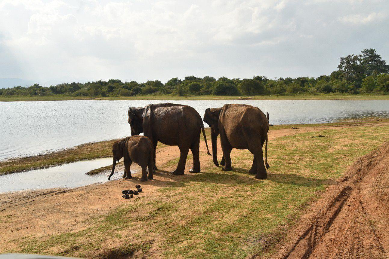 Cet éléphant qui arrive face à notre véhicule en barrissant est très impressionnant!