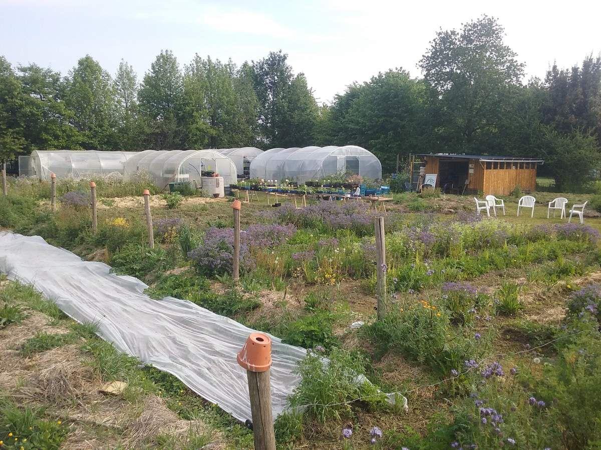 Perma g'rennes est une ferme agricole qui produit des légumes et des semences potagères sur 5 000m2 et qui propose un modèle en permaculture. http://permagrennes.fr/decouvrir-la-ferme/