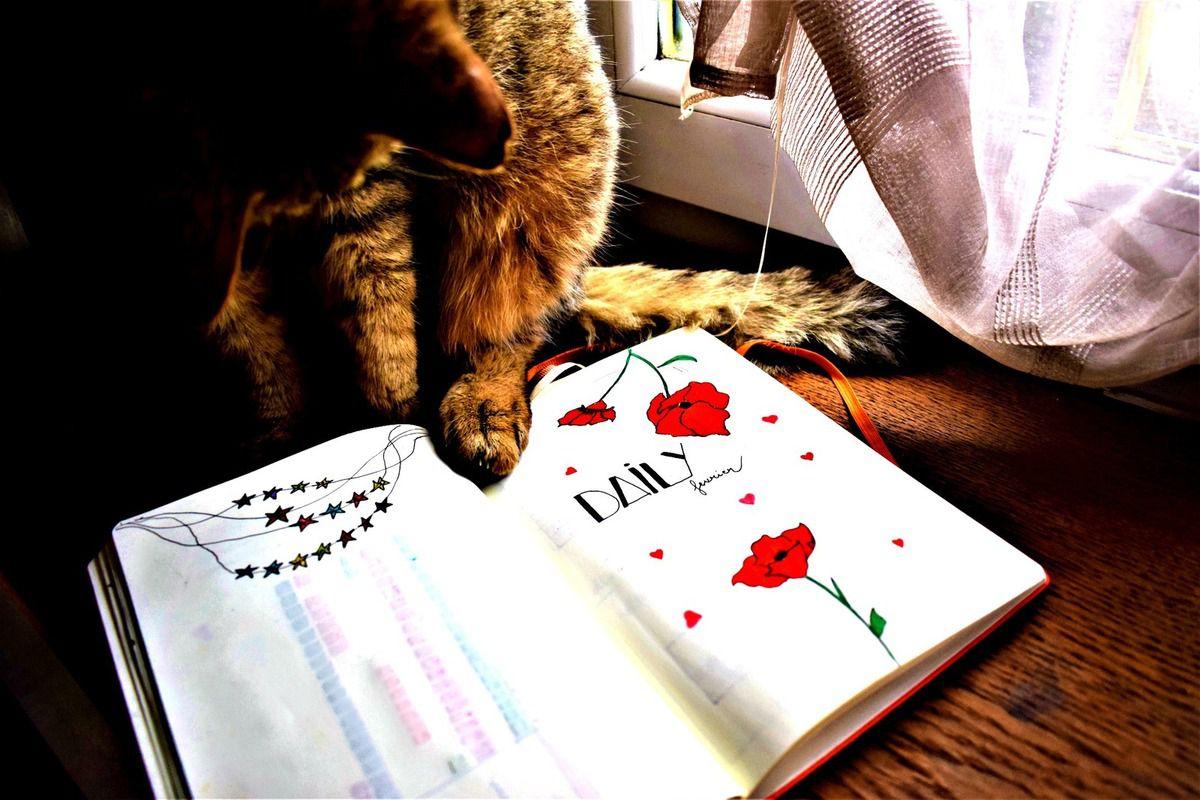 Toujours mes moments marquants du mois de février ♥ Avec mon gros chat Tao ♥