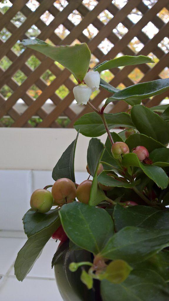 Les fleurs en forme de clochettes