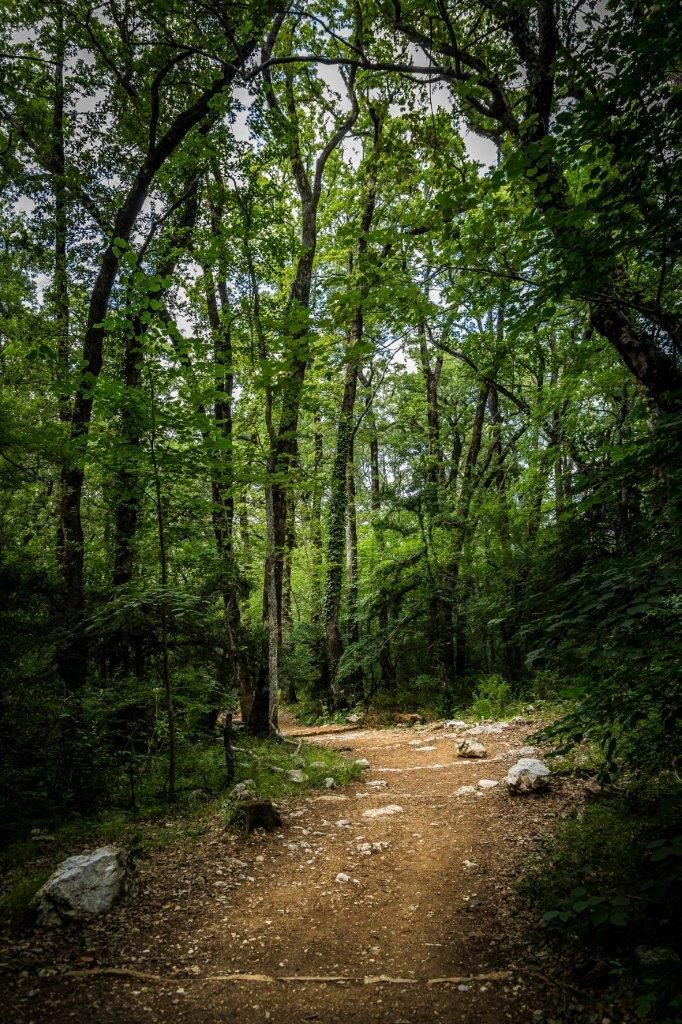 in the forest chemin forestier sainte baume gr9