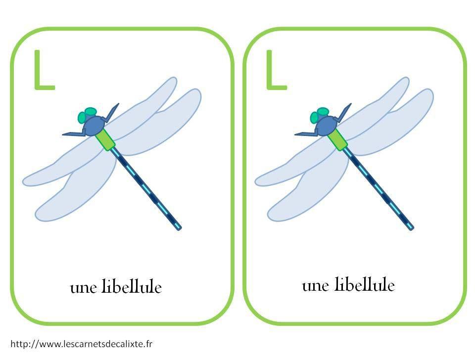mémo insectes