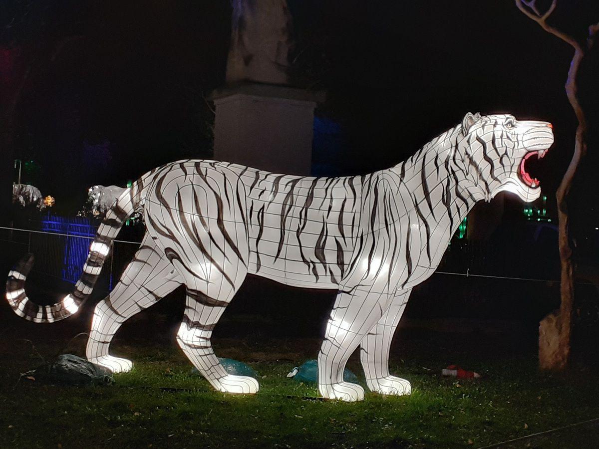 lanterne tigre