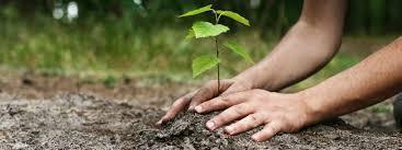 Reforest'Action pour sauver la planète Reforest'Action to save the planet