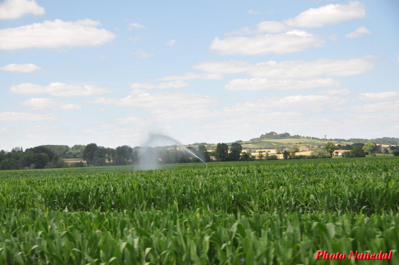Il fait chaud.... arrosage des maïs sur la plaine de la Limagne.