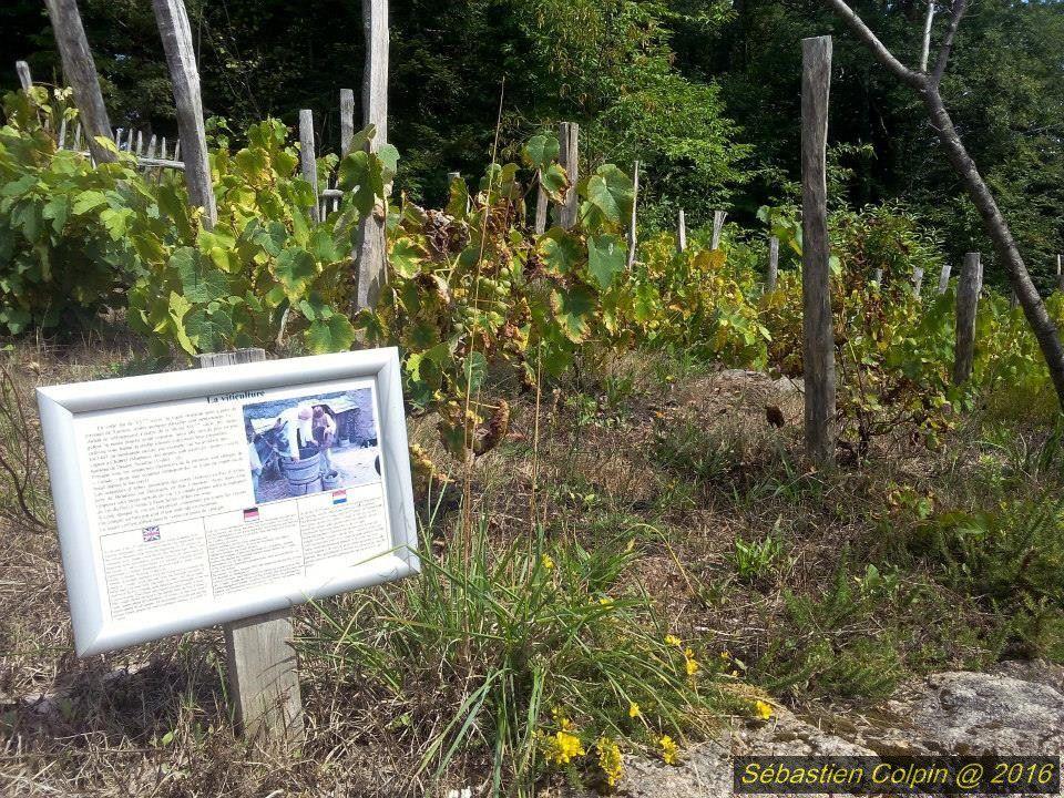 Musée de plein air, restituant avec fidélité un ensemble de chaumières aux murs de pierre et toits de chaume dans leur environnement de jardins et vergers. Il est desservi par un réseau de chemins bordés de murets et offre une vue imprenable sur les monts d'Auvergne. Ce site est aussi un conservatoire de plantes caractéristiques des sites médiévaux et l'élevage d'animaux domestiques qui y est pratiqué a fait l'objet d'études archéozoologiques.   Des visites guidées permettent de se plonger dans la vie des paysans de la Xaintrie au XVème siècle. Une reconstitution ludique et vivante. Projection à l'accueil d'une vidéo retraçant la vie de Martinou, paysan-moine. Ouvert des vacances de Pâques à la Toussaint : - Hors saison de 14h à 18h sauf le samedi - Pendant la saison : tous les jours de 10h à 19h Visites guidées pour individuels à heures fixes, les dimanches, jours fériés en juin et septembre et tous les jours en Juillet-Août. Visites guidées en allemand sur demande. Visites également sur demande pour les groupes de Pâques au 2 novembre. Entrée payante. Tarif : 6€ (adultes) 4€ (enfants) 5€ (groupes adultes) +1€ pour la visite guidée Dates Du  03/04/2016  au  02/11/2016