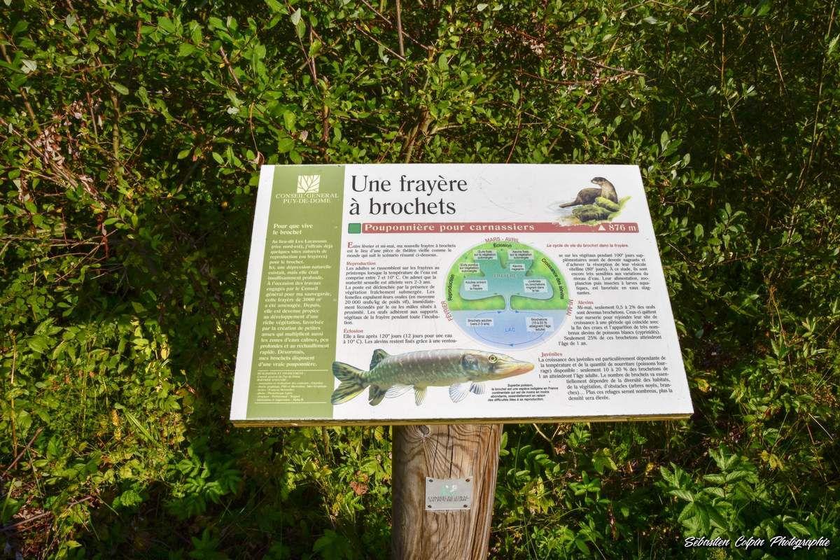 Le Lac Chambon à Chambon sur Lac dans le Puy de Dôme en Auvergne