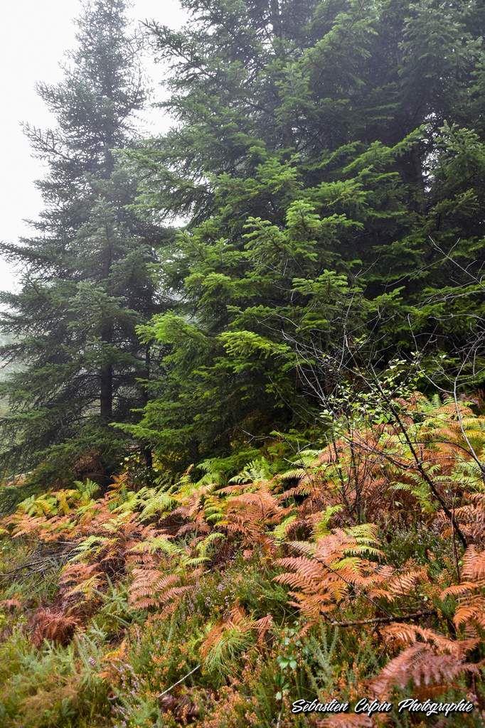 Aubazine, sentiers de Pauliac, une forêt majestueuse en Corrèze
