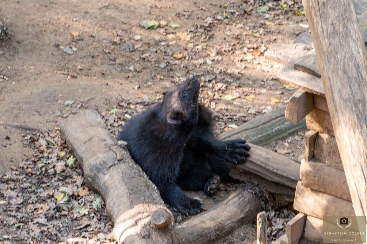 La Réserve Zoologique de Calviac en Périgord, une mission de préservation des espèces