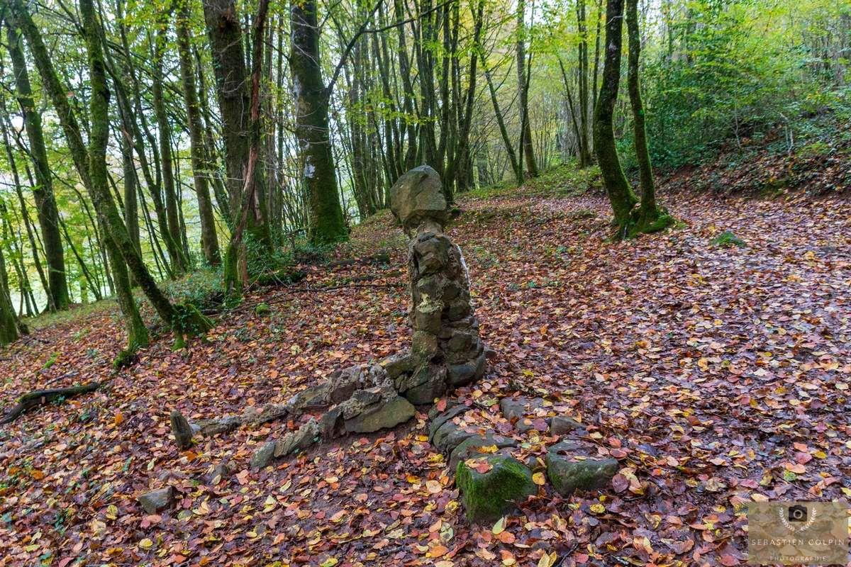 La Forêt de Blanchefort, commune de Lagraulière en Corrèze