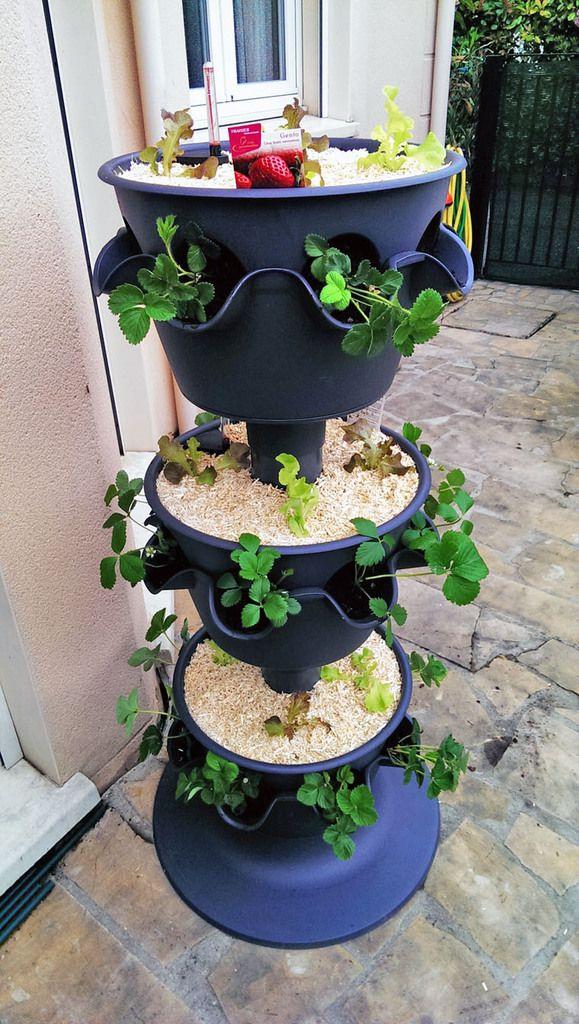 La tour, à deux semaines d'intervalle. Encore une ou deux semaines et ce sera une pure colonne végétale !
