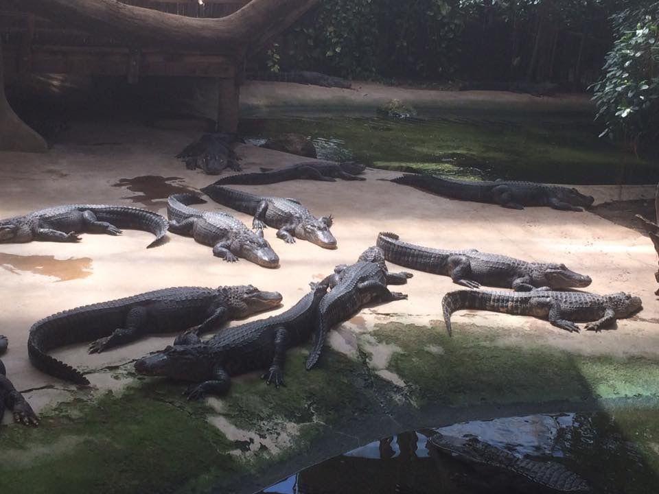 Alligator Bay Bretagne