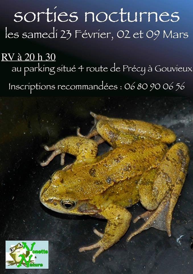 Sortie nocturne : migration des amphibiens à Gouvieux