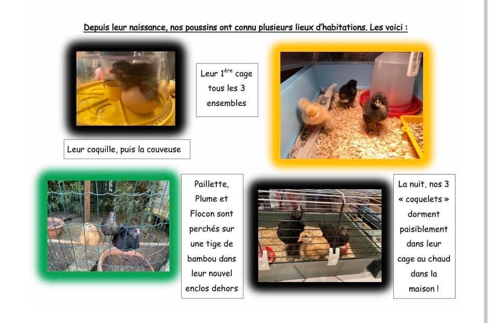 Les oiseaux de la Chartreuse