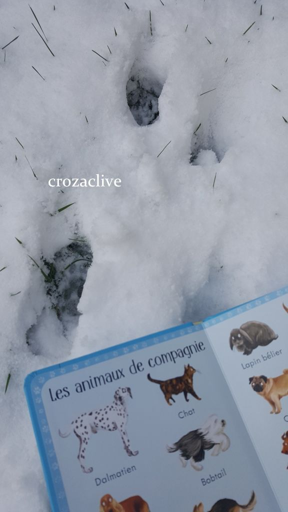 199 animaux en images, EDITIONS USBORNE