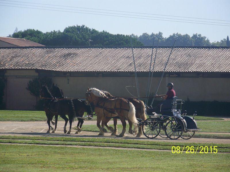 Au fil des années, les chevaux le fascinent toujours autant....