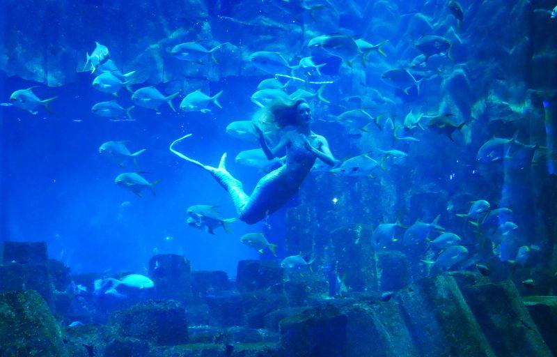 Poulette Aqua Party à l'Aquarium de Paris