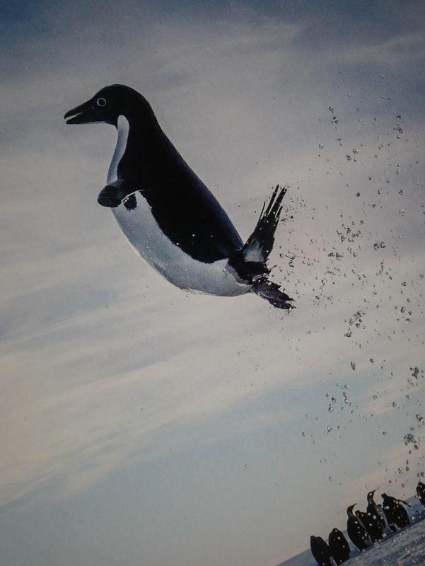 Le saut de la vie d'un Manchot Adélie