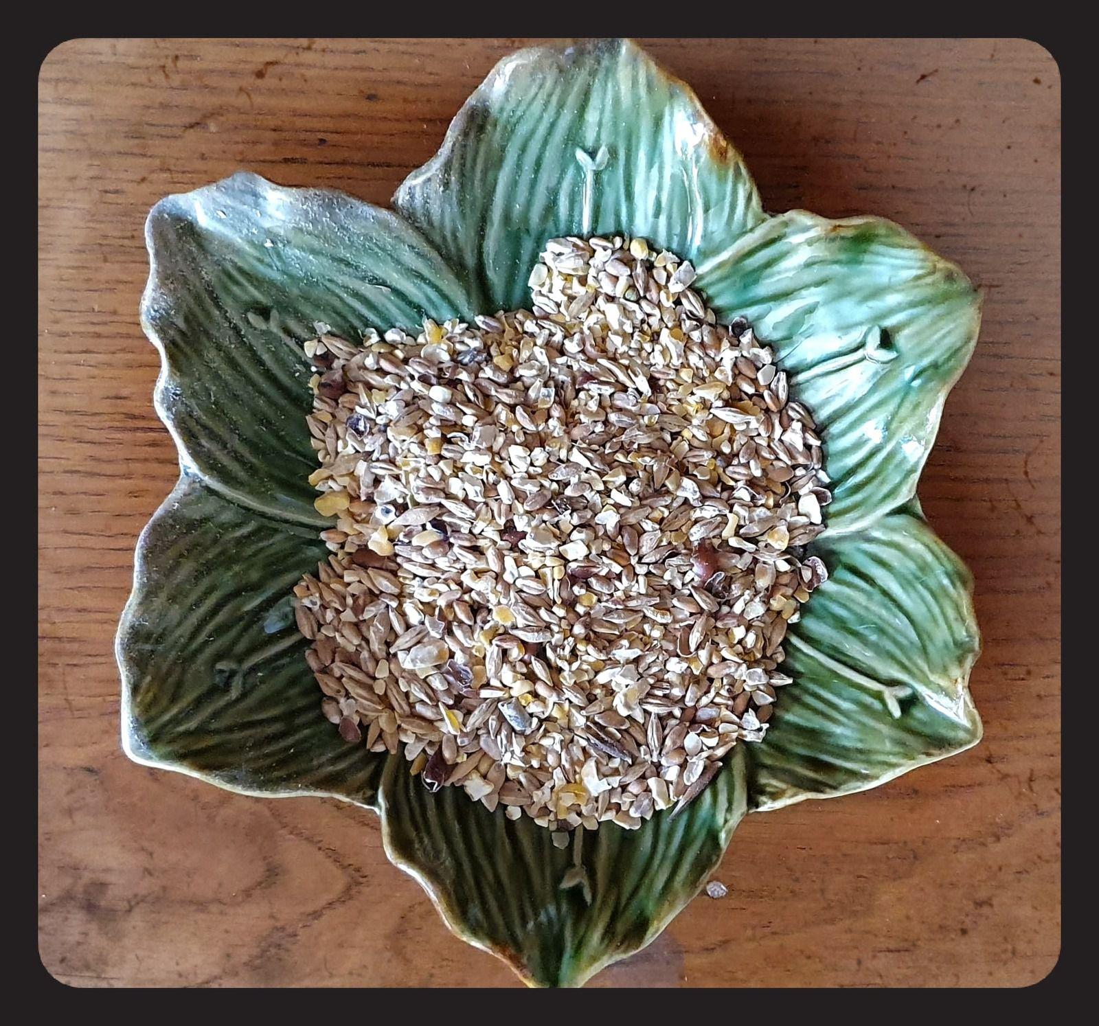 Gasco, la nouvelle gamme Bio pour gâter nos poules