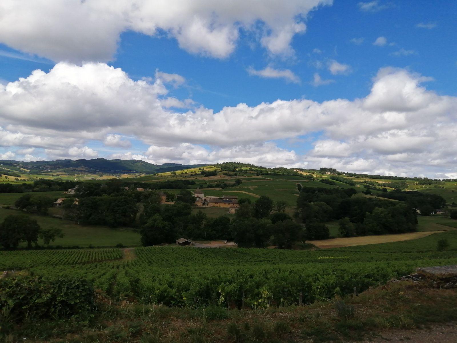Vignobles vus du Village de Chaintré Bourgogne