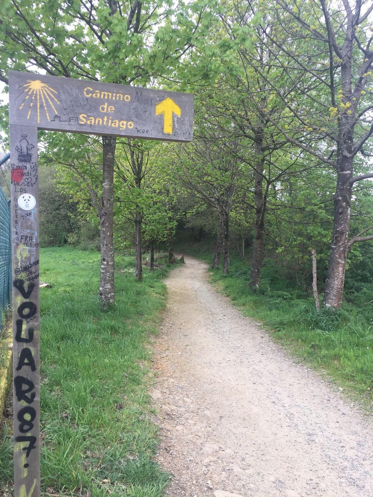 JOUR 26 : A SALCEDA - SANTIAGO DE  COMPOSTELLA ( 28 kms)
