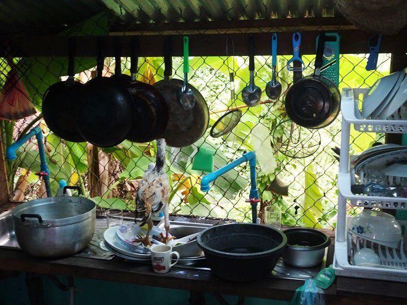 De temps en temps, il fallait les chasser les poules qui entraient dans la cuisine... Si, regardez bien, celle-là s'est mise en tête de faire la vaisselle!