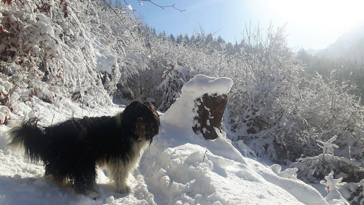Winterwanderung ob Bludenz