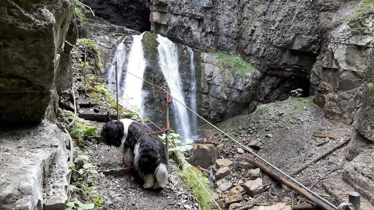 Schmal, steil, rutschig weil feucht - aber meist gut gesichert: alpiner Steig