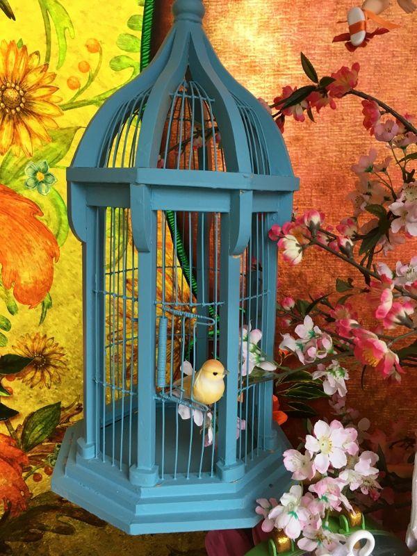 Oiseaux dans les vitrines de Maint Street